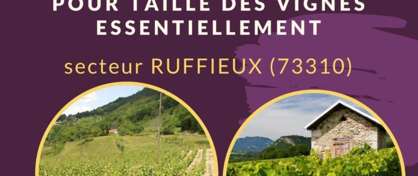 Le Service de Remplacement recrute un agent pour taille des vignes CDD 3 mois