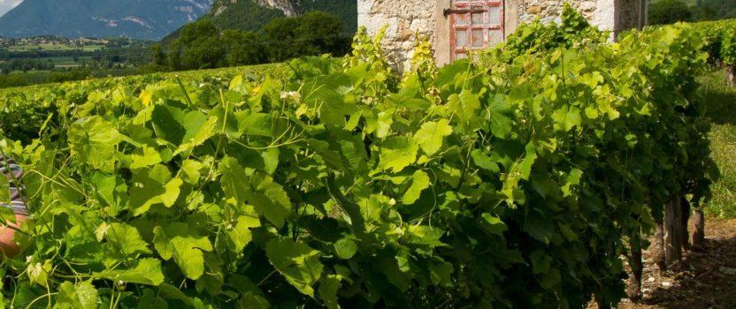 Questions / Réponses sur le métier de vigneron